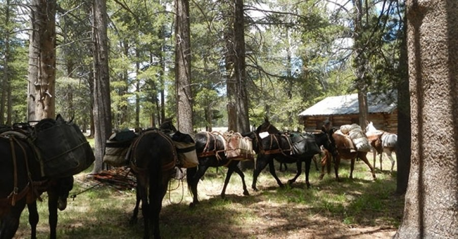 Mules and Pack Station