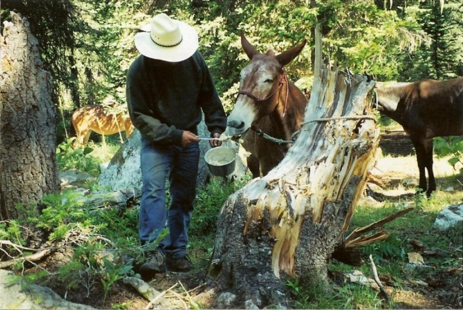 Feeding the Mules